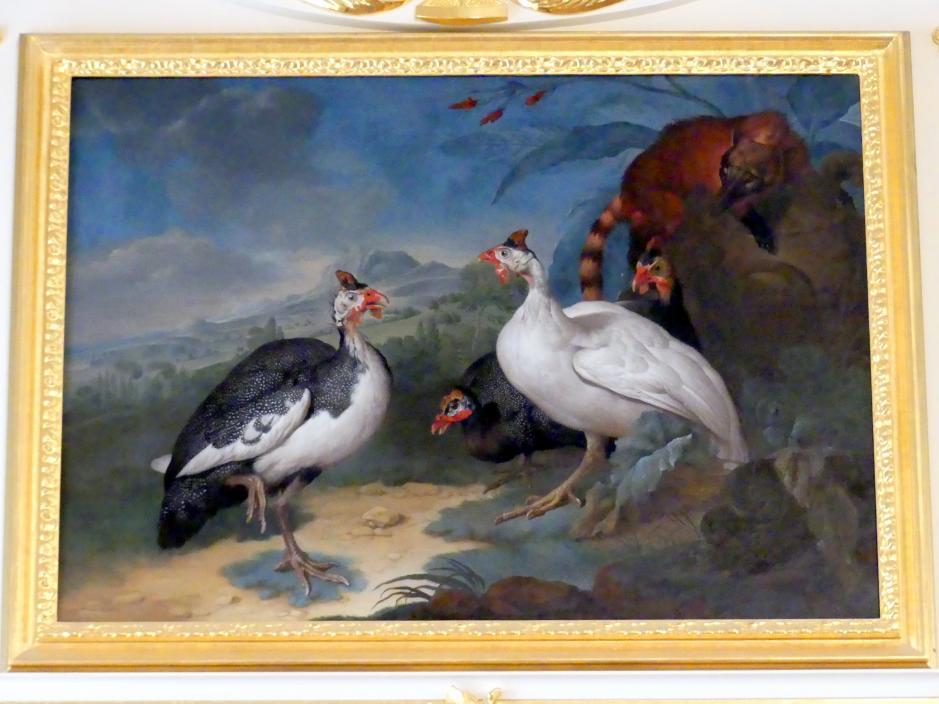 Philipp Ferdinand de Hamilton: Perlhühner und Nasenbär, 1722