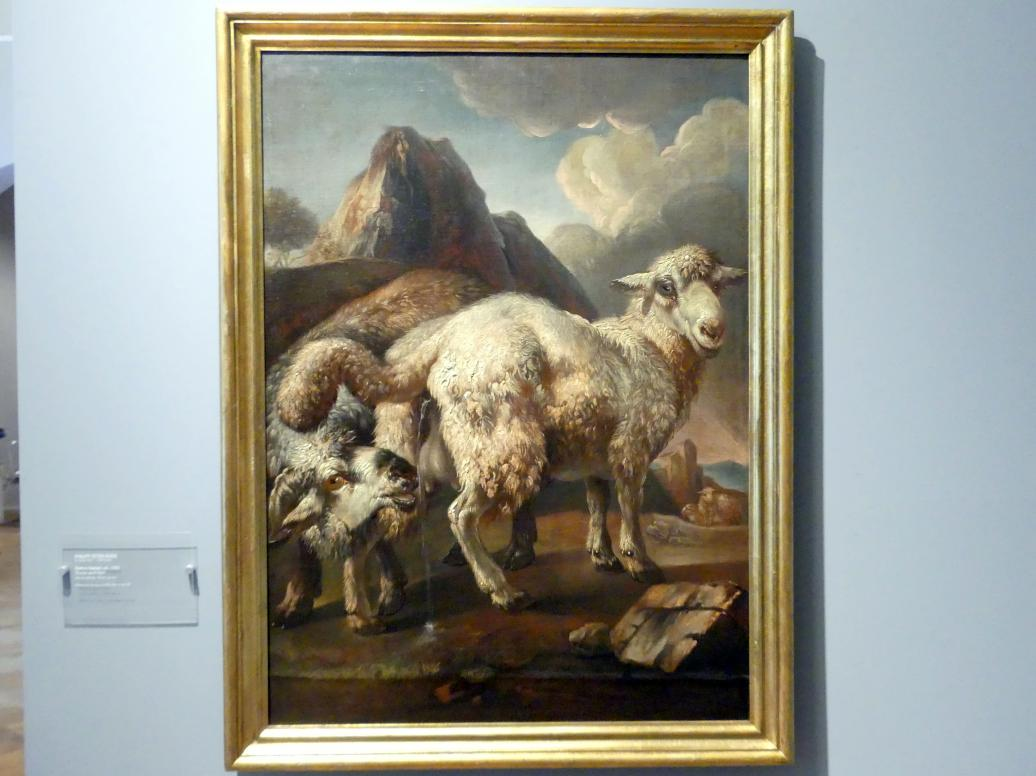 Philipp Peter Roos (Rosa da Tivoli): Schaf und Widder, Um 1690