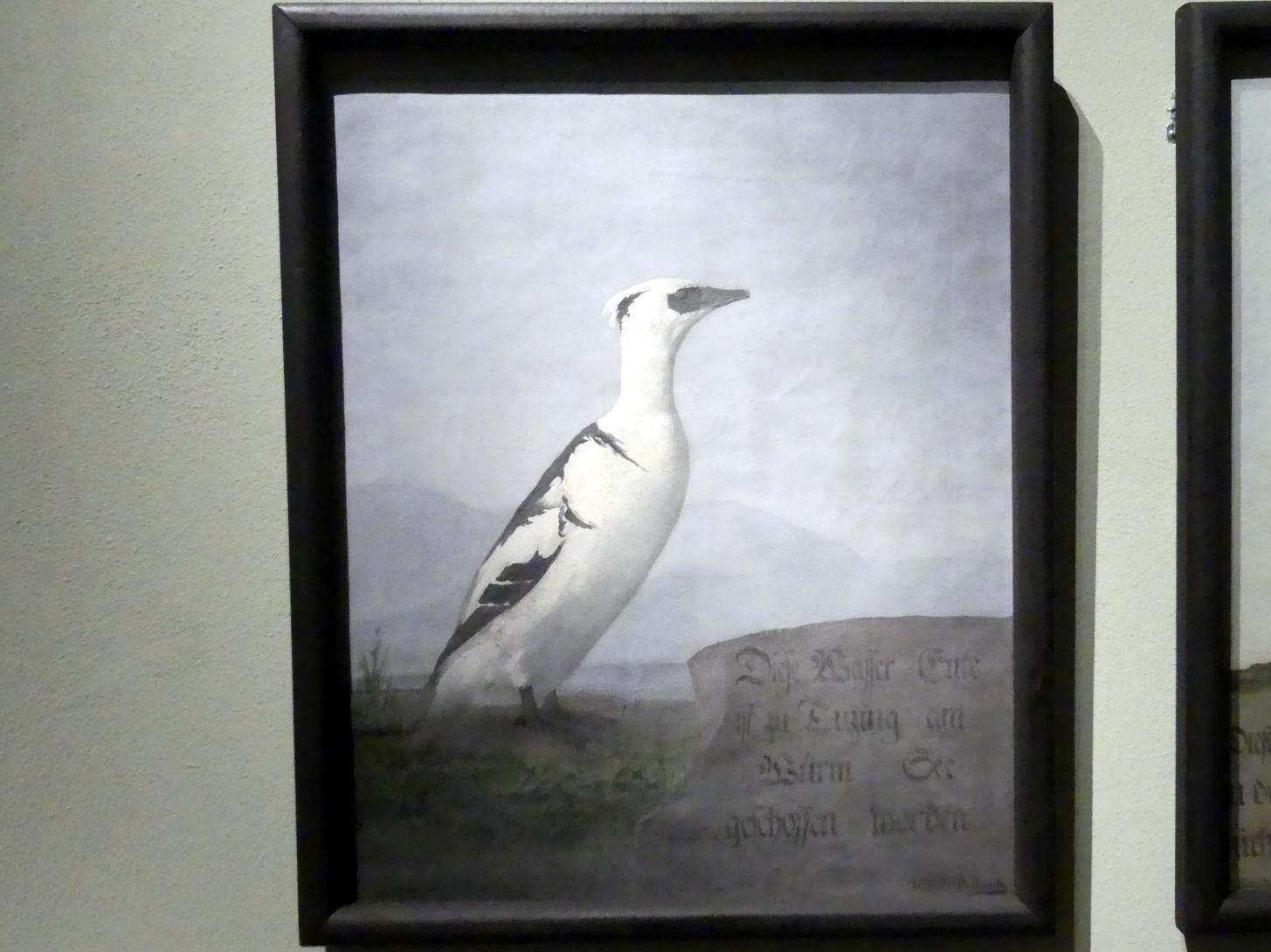 Daniel Busch: Zwergsäger (Mergellus albellus), 1795