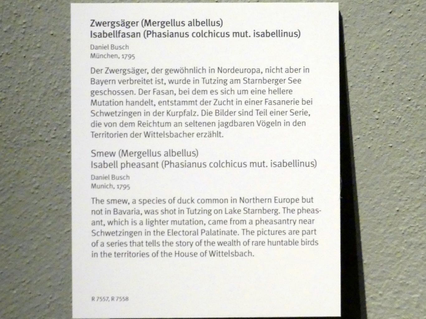 Daniel Busch: Zwergsäger (Mergellus albellus), 1795, Bild 2/2